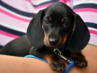 Il collare perfetto per il tuo cane, ecco tutto quello che devi sapere